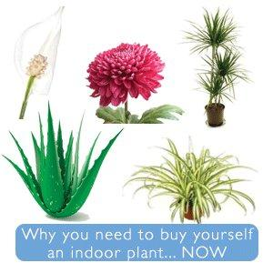 5 Indoor Plants You Need to Know About